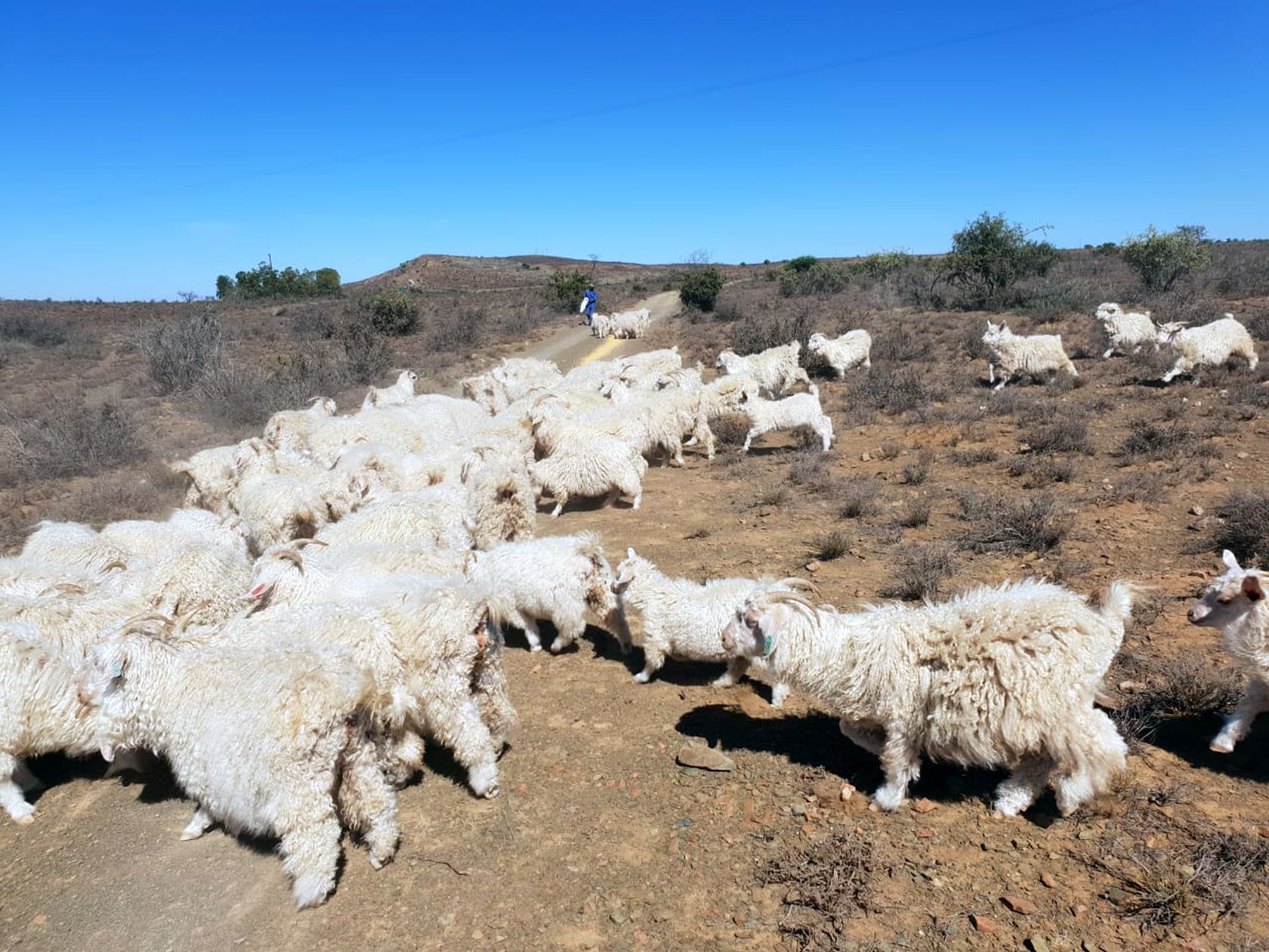 Eastern Cape farmers