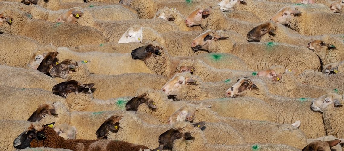 Livestock export industry growing in the Eastern Cape